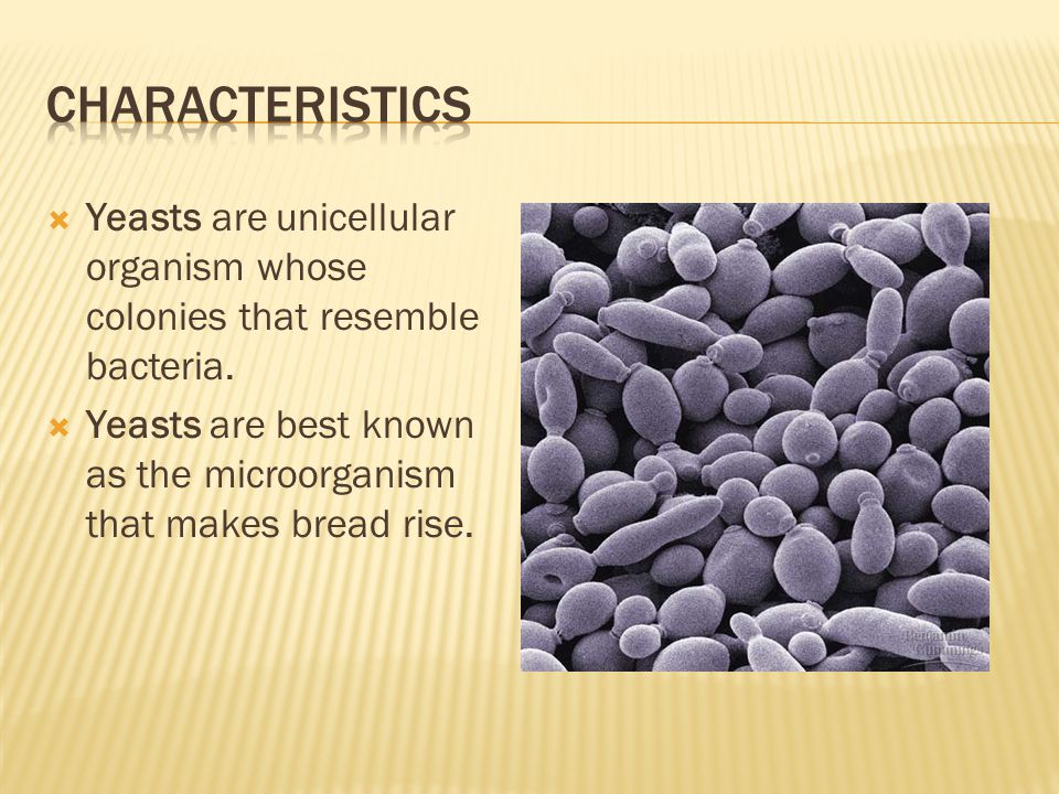 Characteristics Yeasts are unicellular organism whose colonies that resemble bacteria.
