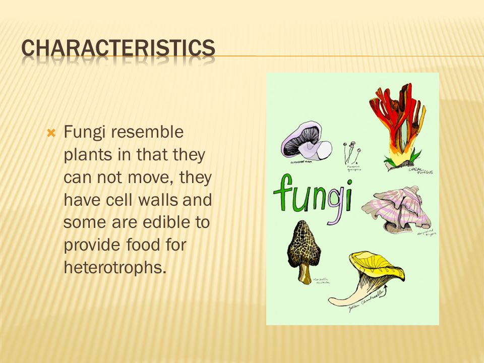 Characteristics Fungi resemble plants in that they can not move, they have cell walls and some are edible to provide food for heterotrophs.