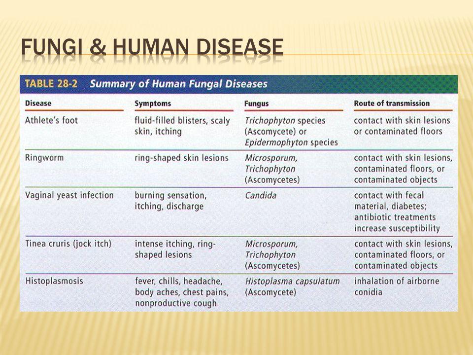 Fungi & human disease
