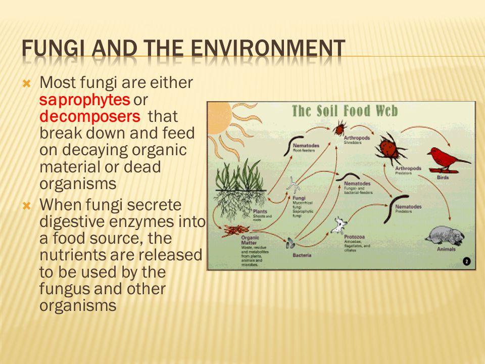 Fungi and the environment