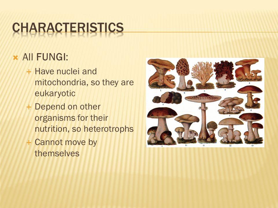 Characteristics All FUNGI: