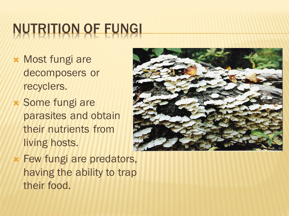 Nutrition of Fungi Most fungi are decomposers or recyclers.