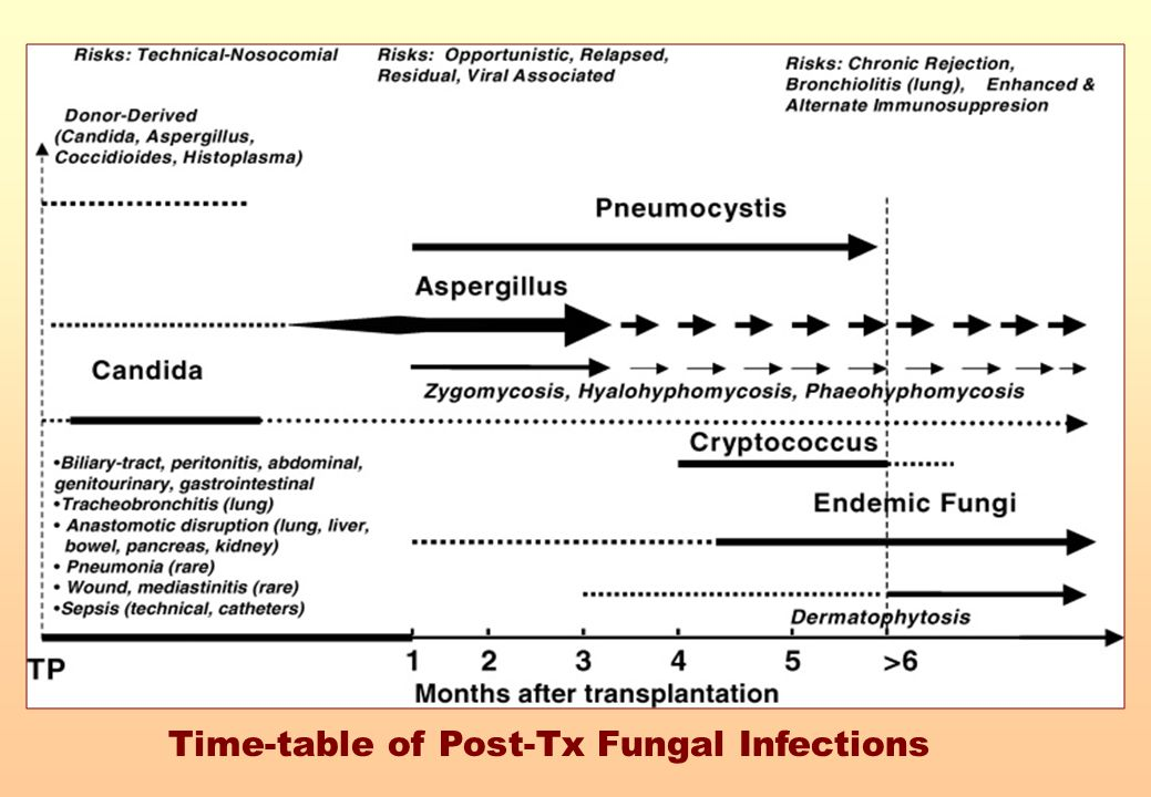 Time-table of Post-Tx Fungal Infections