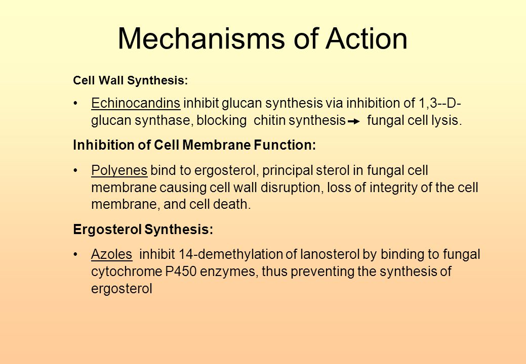 Mechanisms of Action Cell Wall Synthesis: