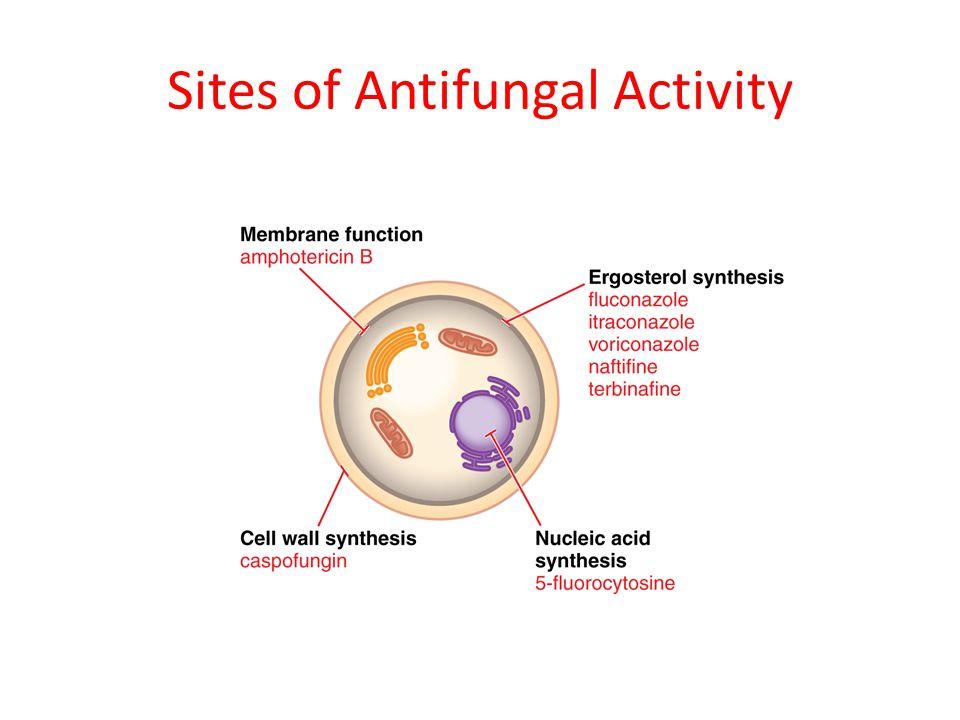 Sites of Antifungal Activity