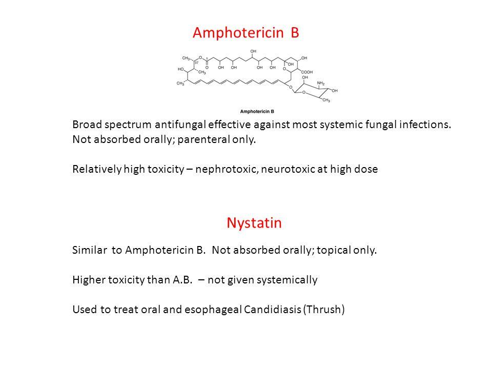 Amphotericin B Nystatin
