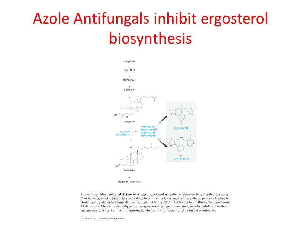 Azole Antifungals inhibit ergosterol biosynthesis