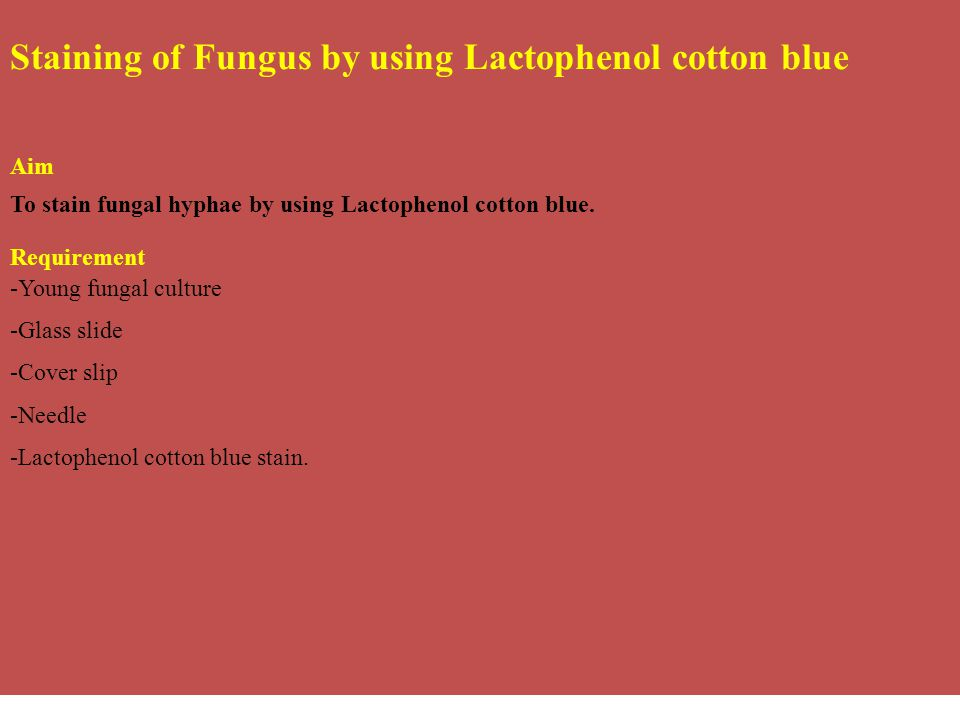 Staining of Fungus by using Lactophenol cotton blue