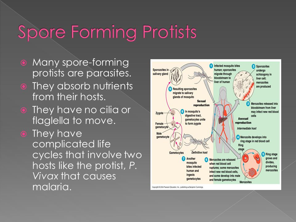 Spore Forming Protists