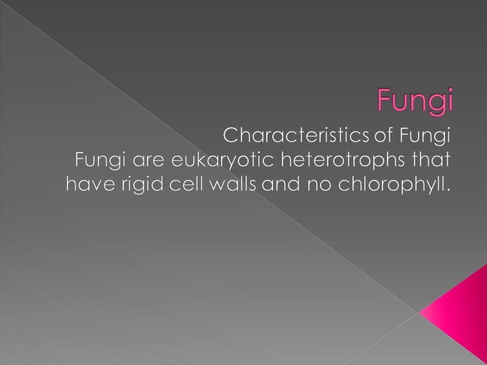 Fungi Characteristics of Fungi