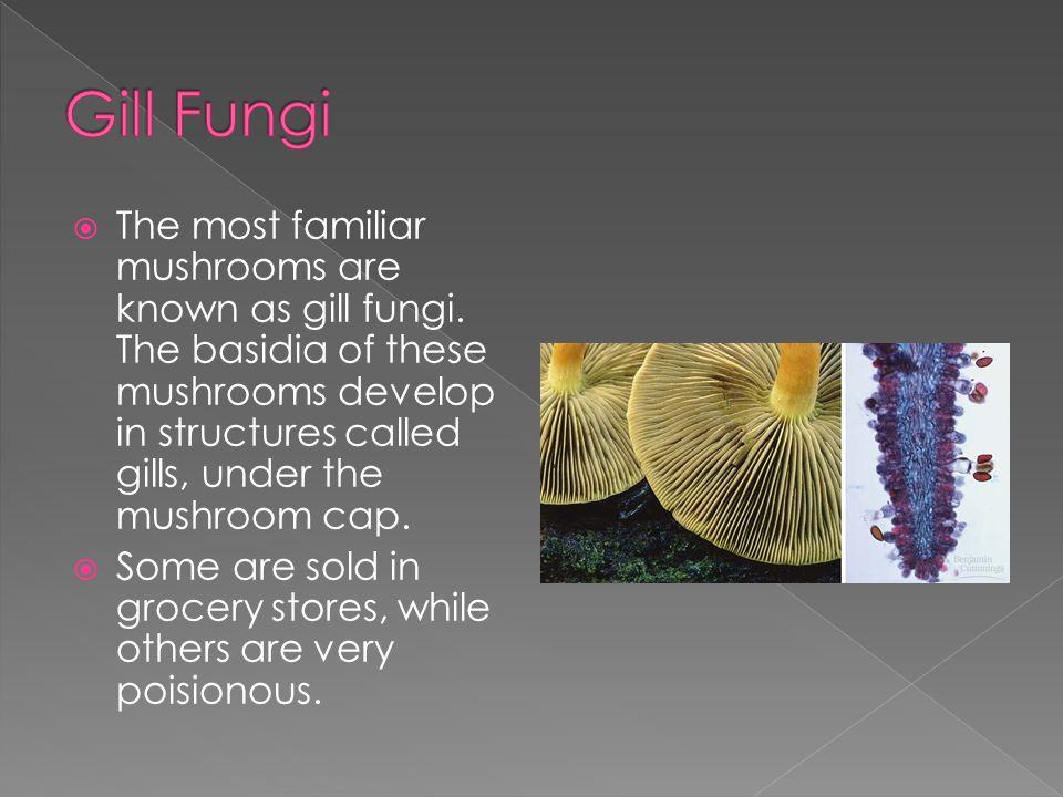 Gill Fungi