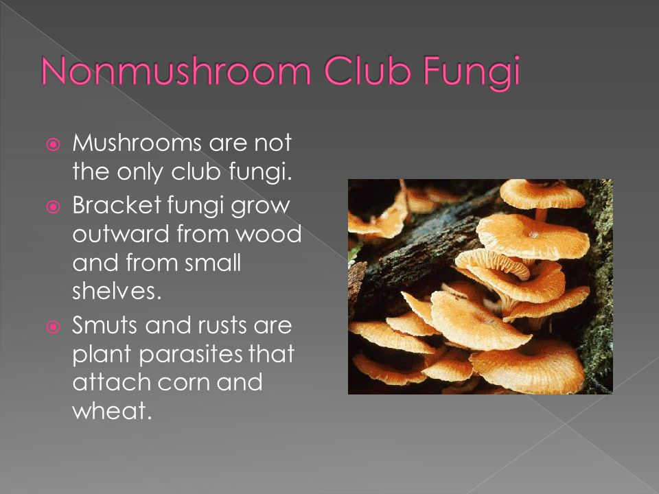 Nonmushroom Club Fungi