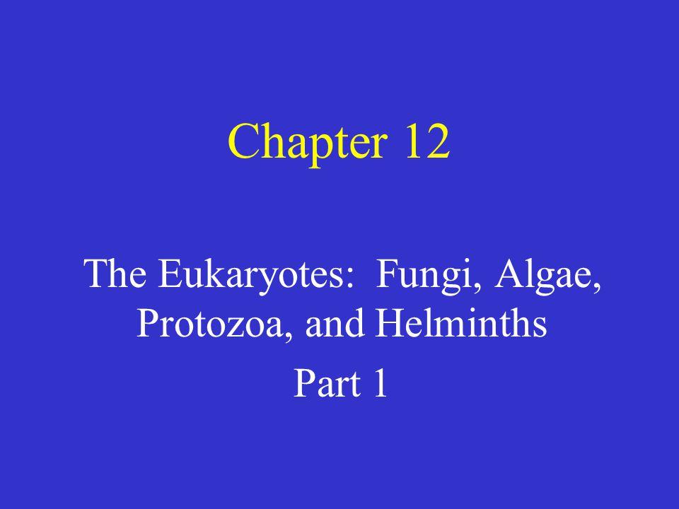 The Eukaryotes: Fungi, Algae, Protozoa, and Helminths Part 1