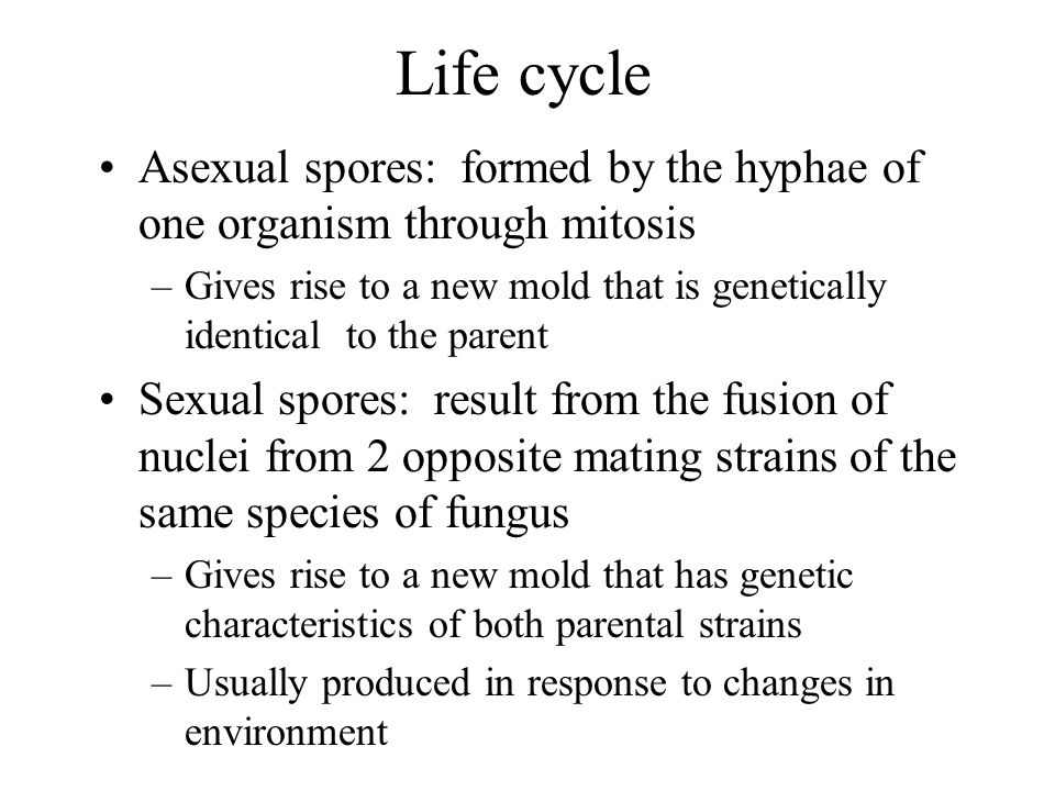 Life cycle Asexual spores: formed by the hyphae of one organism through mitosis.