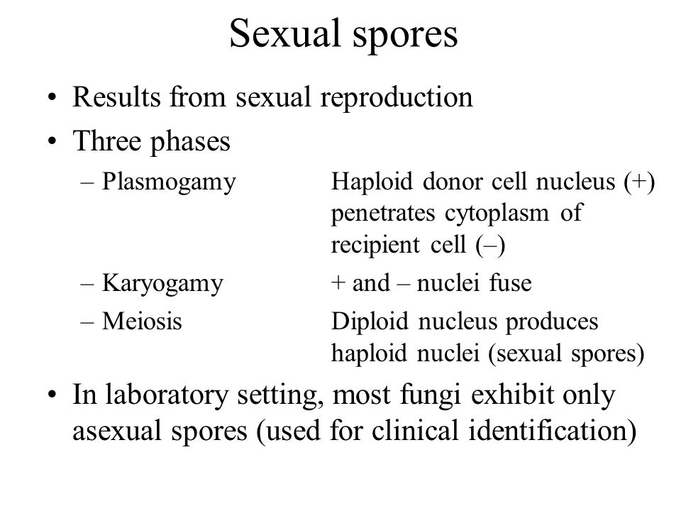 Sexual spores Results from sexual reproduction Three phases