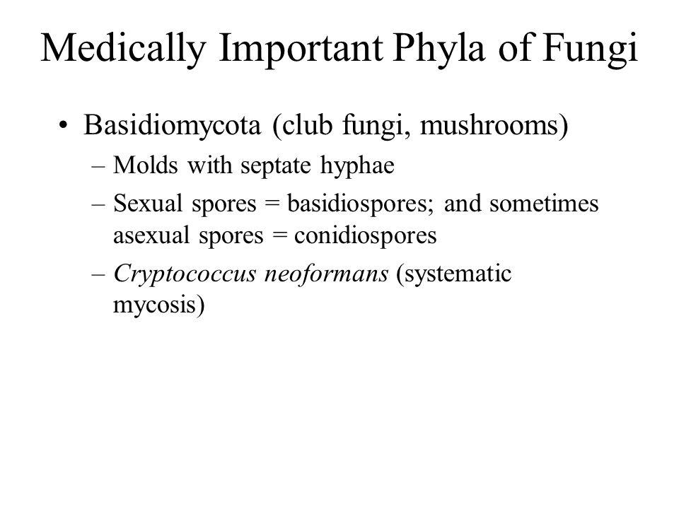 Medically Important Phyla of Fungi