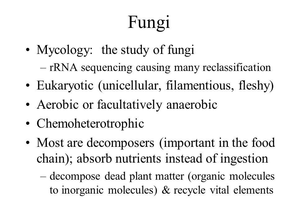 Fungi Mycology: the study of fungi