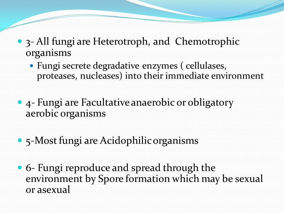 3- All fungi are Heterotroph, and Chemotrophic organisms