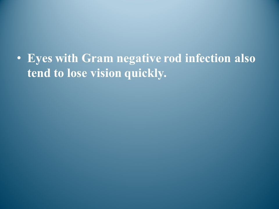 Eyes with Gram negative rod infection also tend to lose vision quickly.