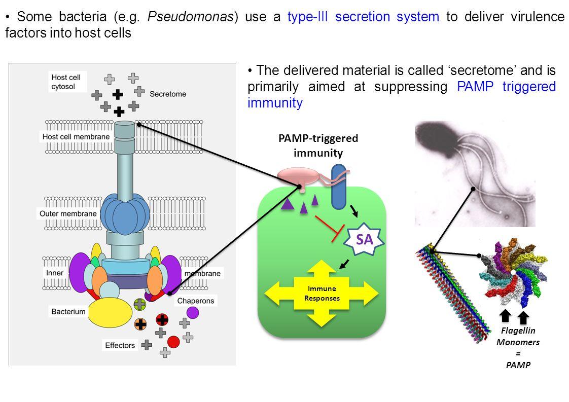 PAMP-triggered immunity