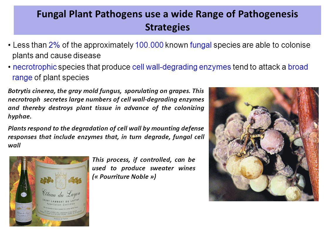 Fungal Plant Pathogens use a wide Range of Pathogenesis Strategies