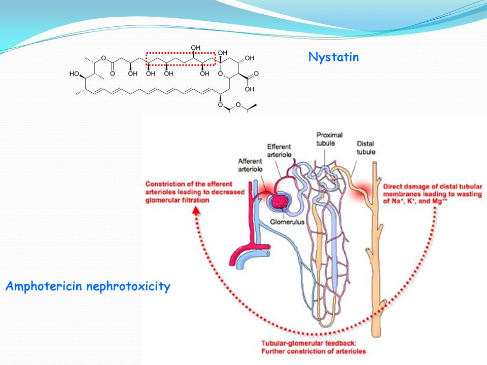 Nystatin Amphotericin nephrotoxicity