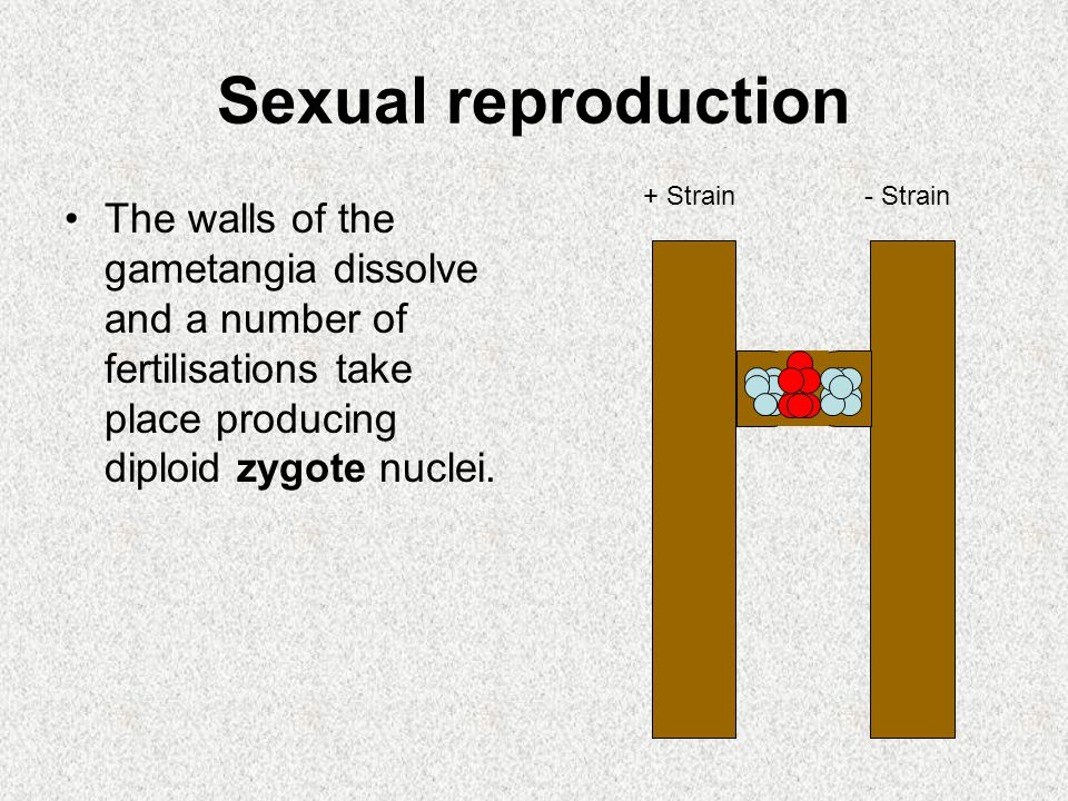 Sexual reproduction + Strain. - Strain.