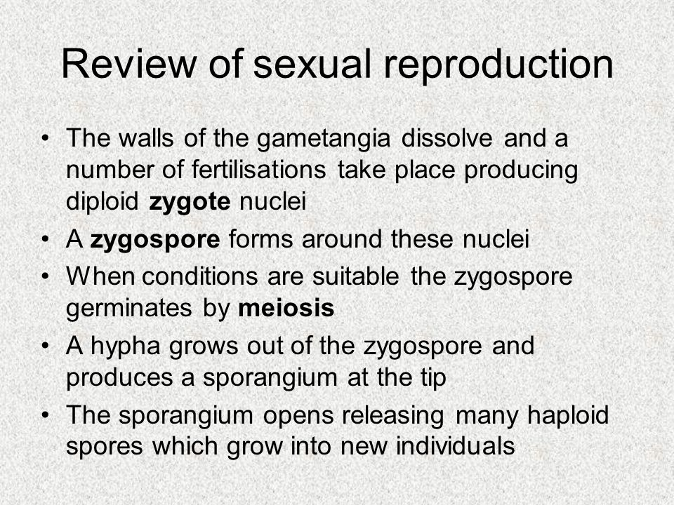Review of sexual reproduction