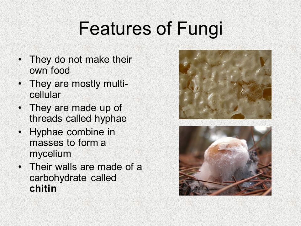 Features of Fungi They do not make their own food