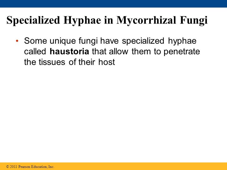 Specialized Hyphae in Mycorrhizal Fungi
