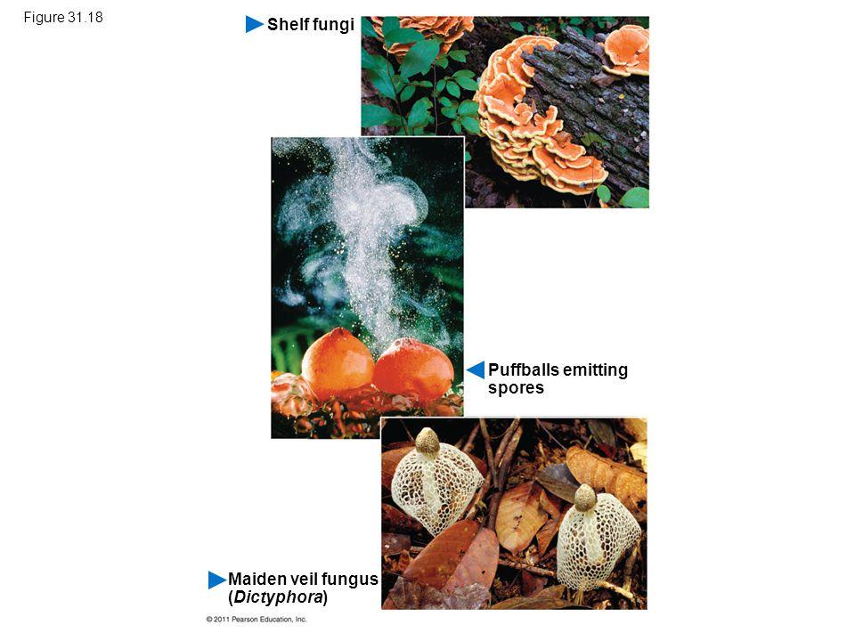 Puffballs emitting spores