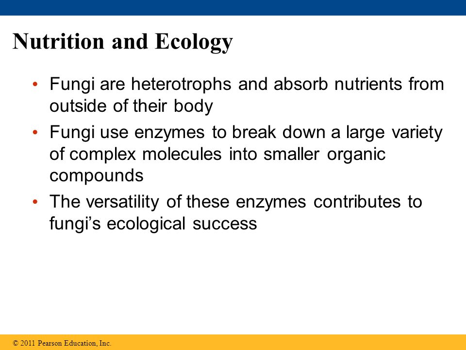 Nutrition and Ecology Fungi are heterotrophs and absorb nutrients from outside of their body.