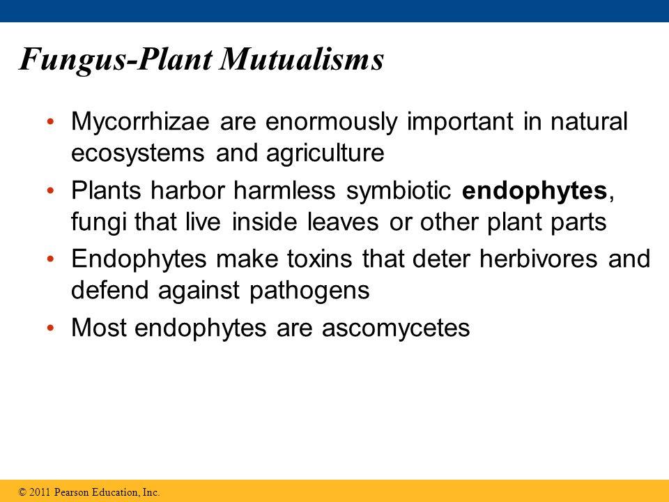 Fungus-Plant Mutualisms