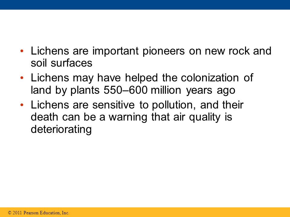 Lichens are important pioneers on new rock and soil surfaces
