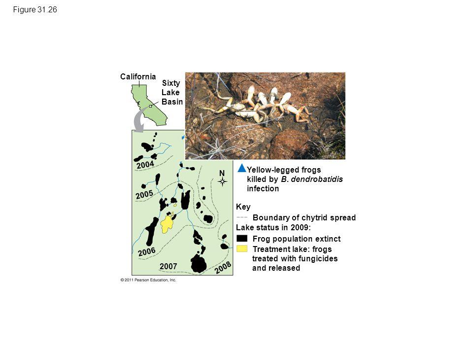 Figure 31.26 California. Sixty Lake Basin. 2004. Yellow-legged frogs killed by B. dendrobatidis infection.