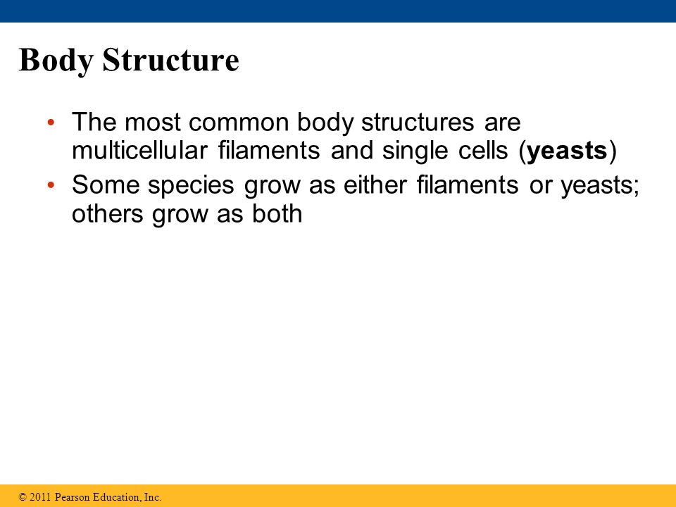 Body Structure The most common body structures are multicellular filaments and single cells (yeasts)
