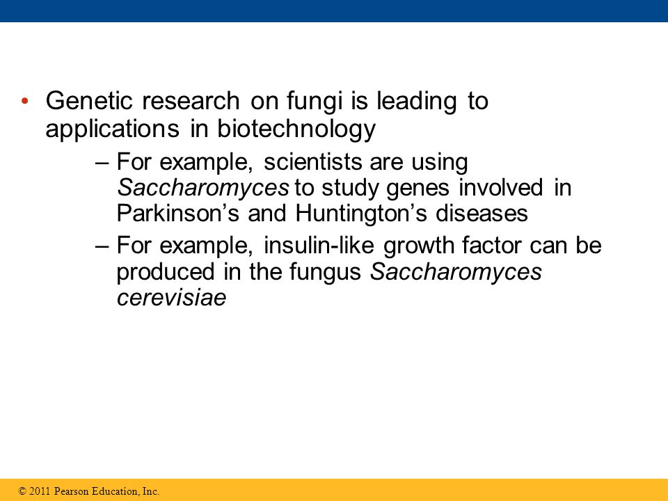 Genetic research on fungi is leading to applications in biotechnology