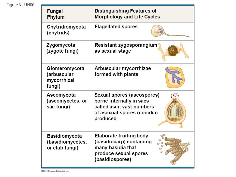 Distinguishing Features of Morphology and Life Cycles