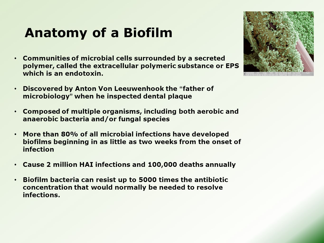 Anatomy of a Biofilm