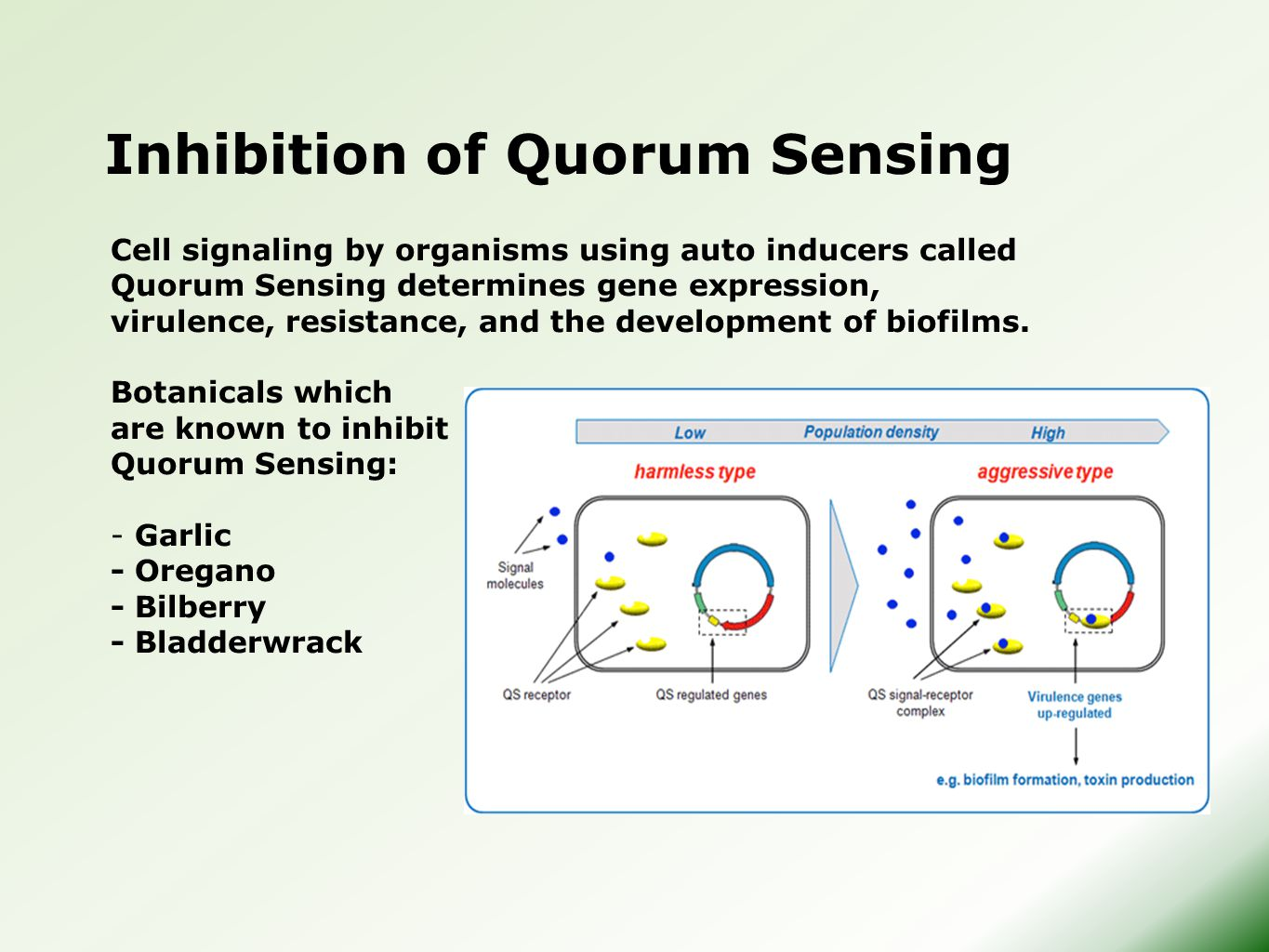 Inhibition of Quorum Sensing