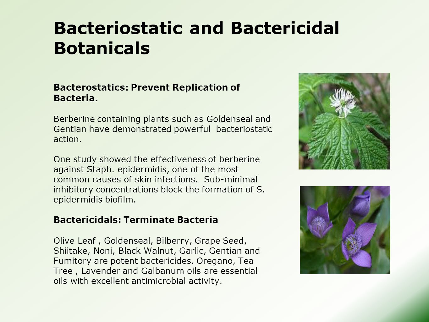 Bacteriostatic and Bactericidal Botanicals