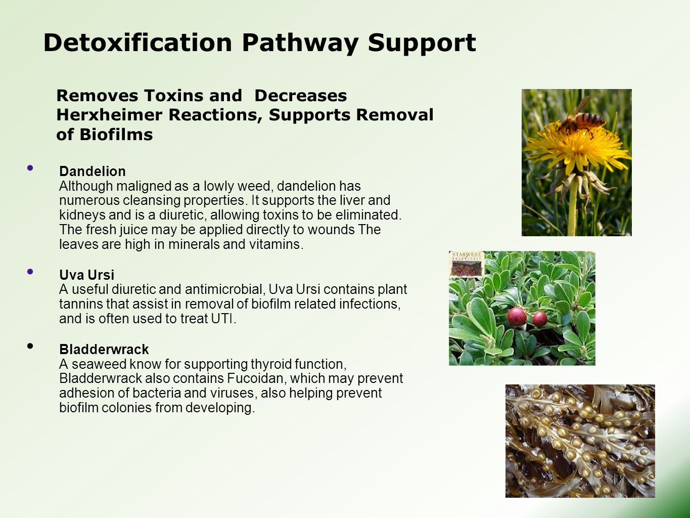 Detoxification Pathway Support