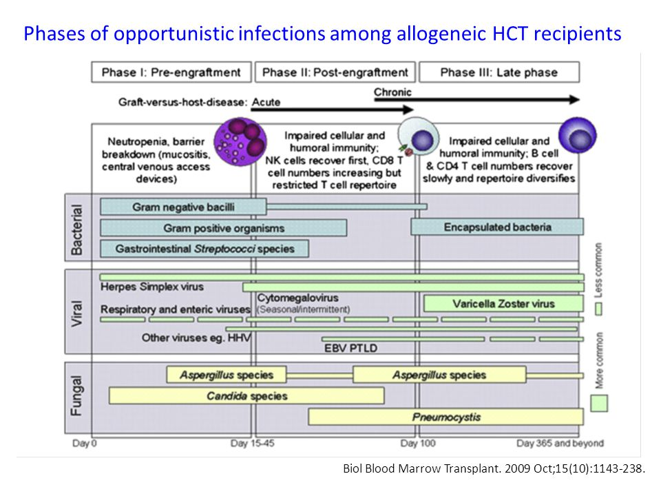 Phases of opportunistic infections among allogeneic HCT recipients