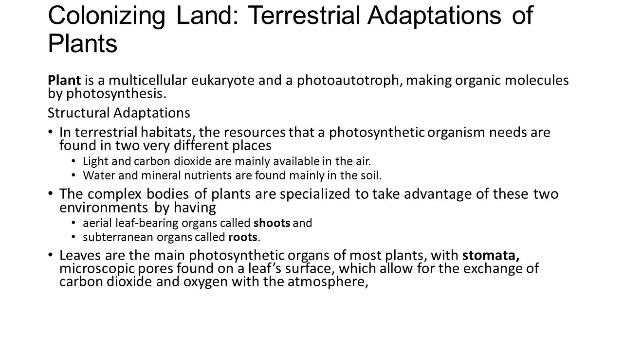 Colonizing Land: Terrestrial Adaptations of Plants
