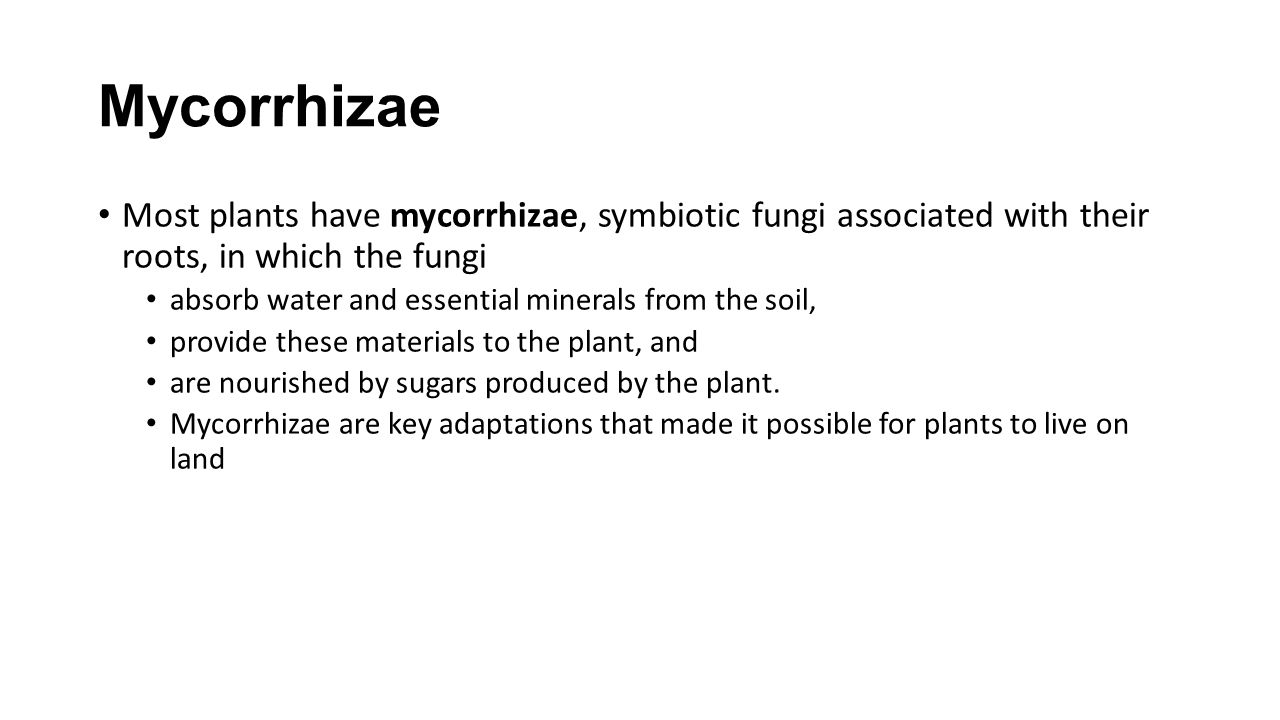 Mycorrhizae Most plants have mycorrhizae, symbiotic fungi associated with their roots, in which the fungi.