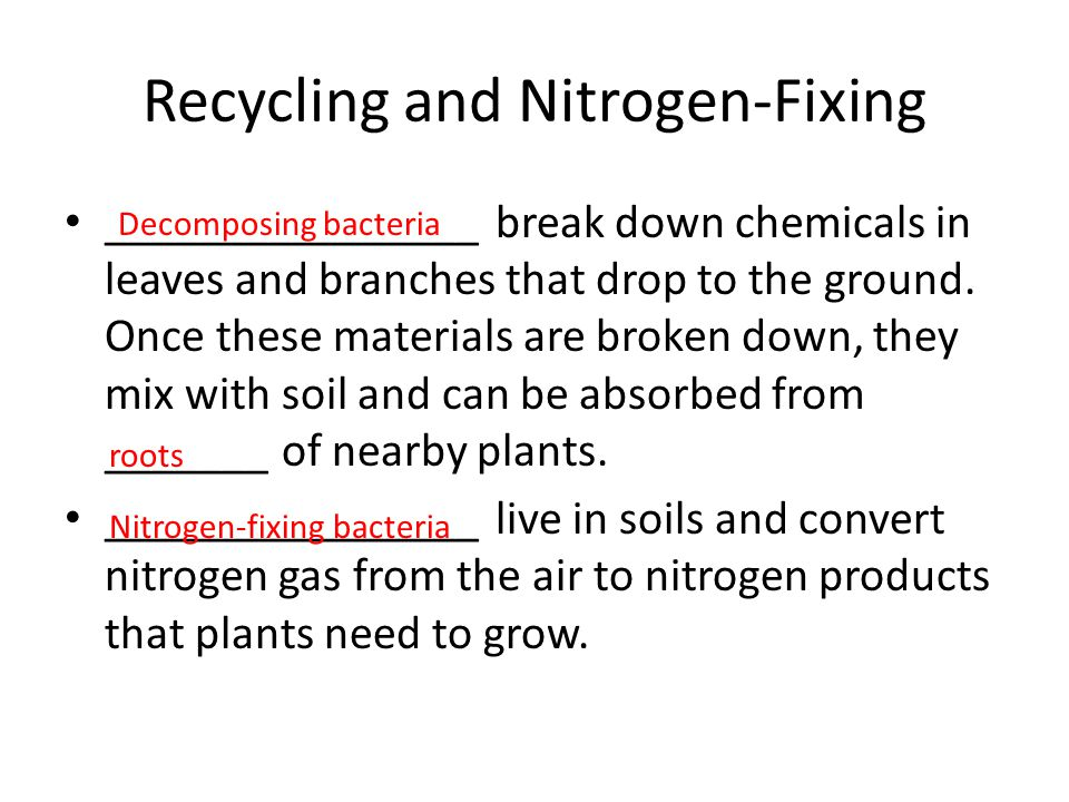 Recycling and Nitrogen-Fixing