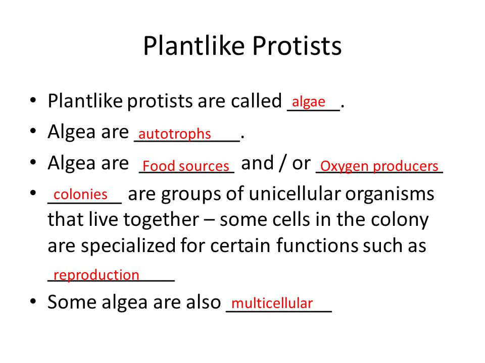Plantlike Protists Plantlike protists are called _____.