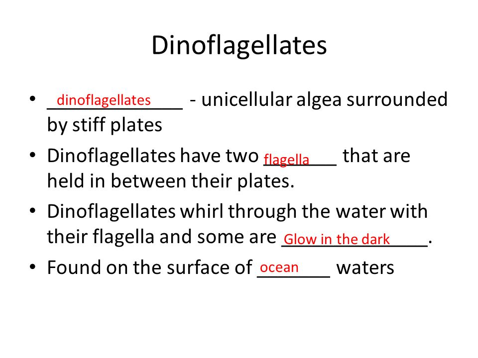 Dinoflagellates _____________ - unicellular algea surrounded by stiff plates.