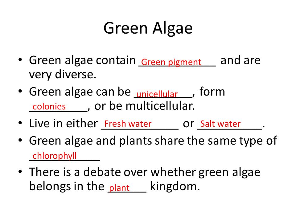 Green Algae Green algae contain ____________ and are very diverse.