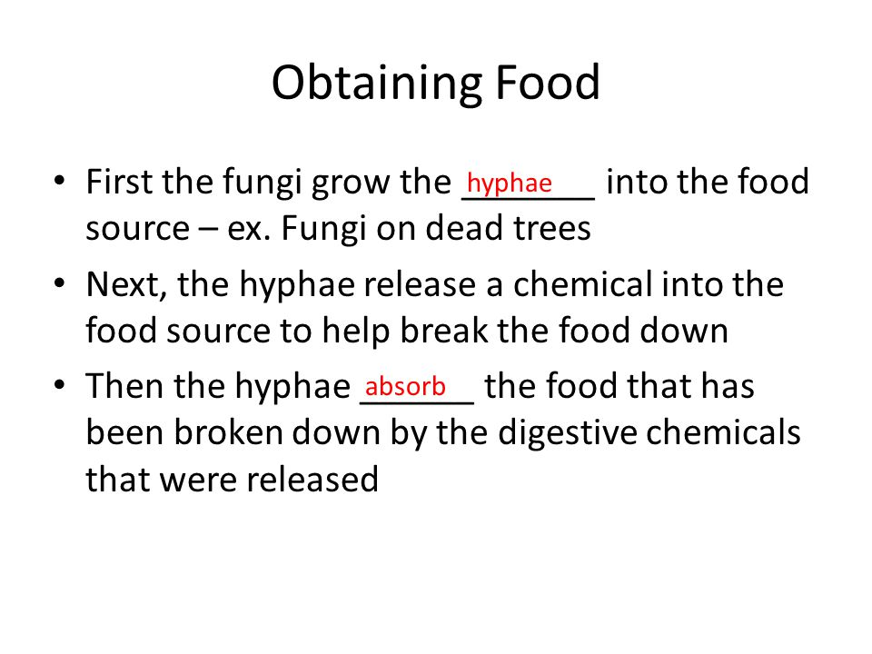 Obtaining Food First the fungi grow the _______ into the food source – ex. Fungi on dead trees.